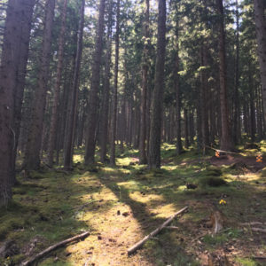 The trail at Mutters