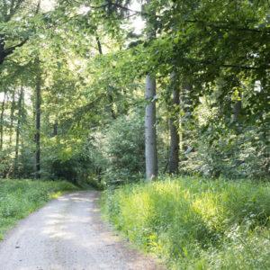 Lesní cesta je příjemné zpestření
