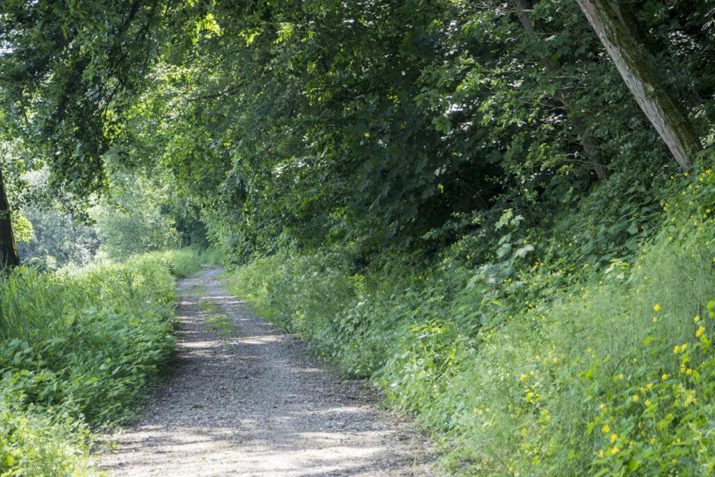Občas cesta vede i jinudy než po perfektním asfaltu