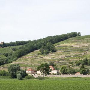 Kopečky a vinice